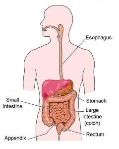 Gastric System